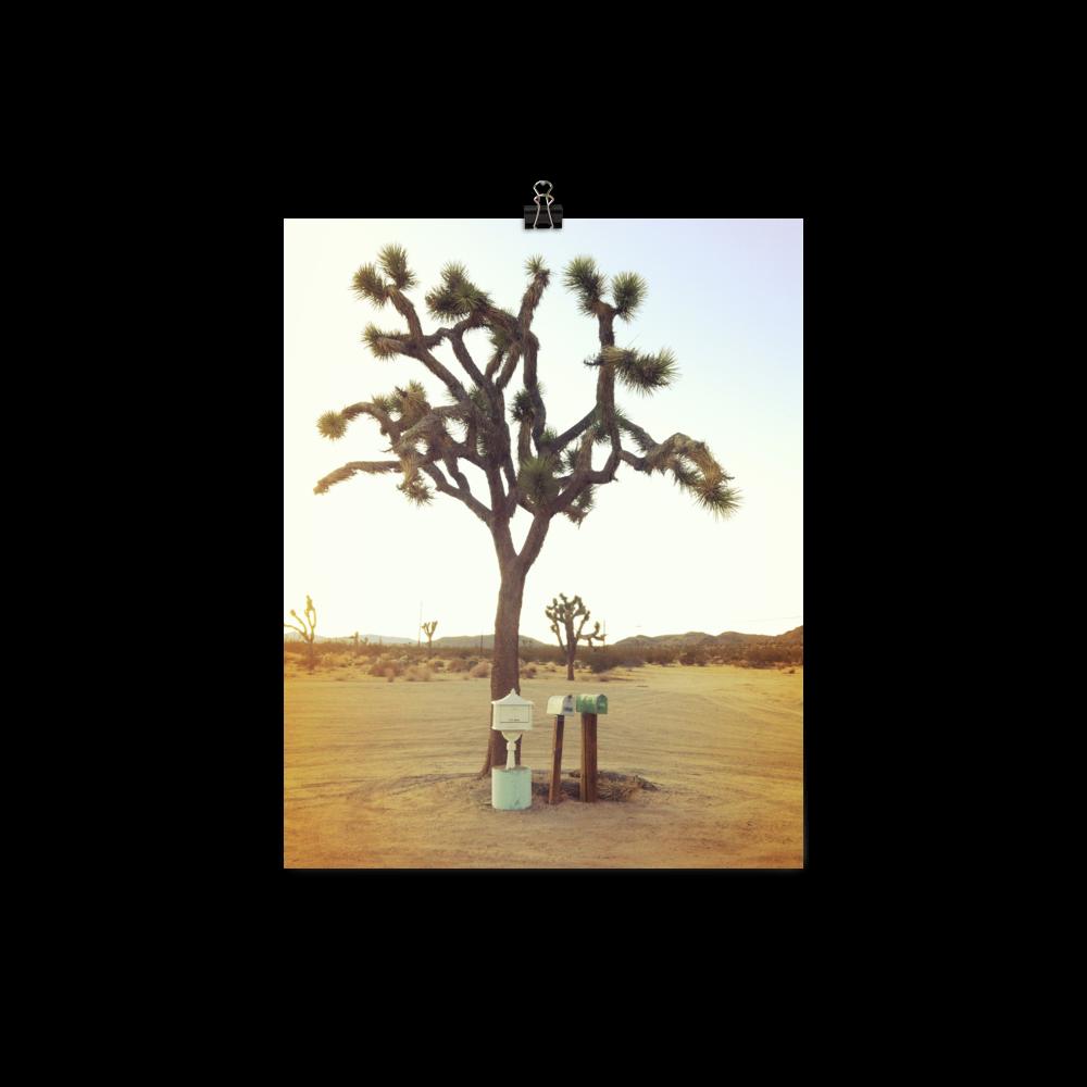 joshua-tree-filter_printfile_default_mockup_Transparent_8x10